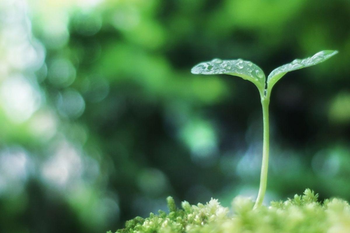植物の芽生え