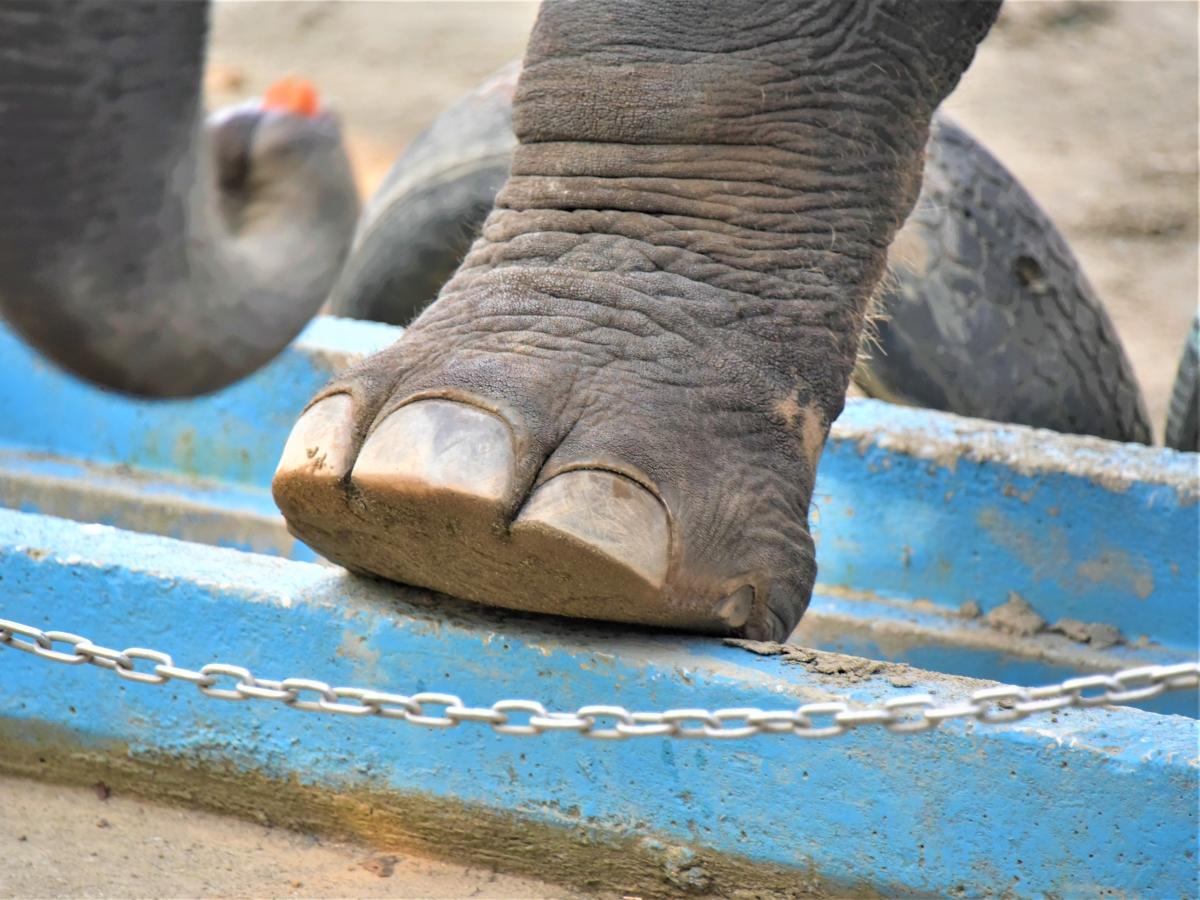 市原ぞうの国_象の足