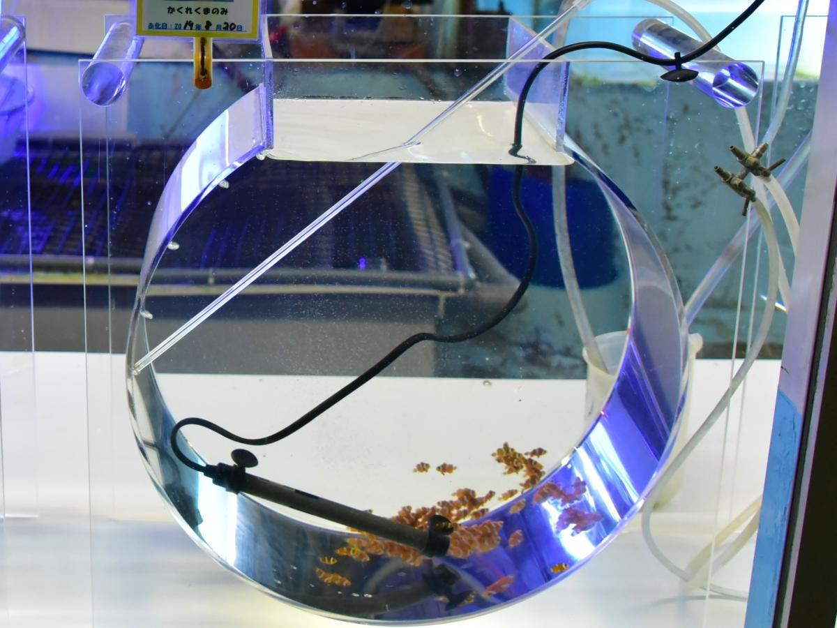 東海大学海洋科学博物館_クラゲの水槽