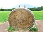 北海道の牧場の藁