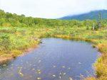 北海道_ニセコ山の川